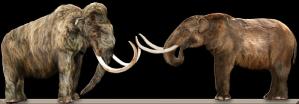 Masatodon v. Mammoth