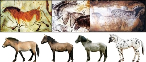 horse-cave-paintings-pnas