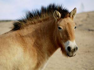 wild-horse_758_600x450