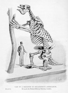 sharp_hutchinson_megatherium